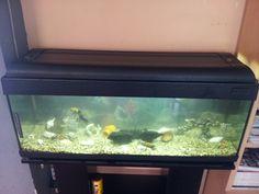 Tanks & Aquariums on Pinterest Aquascaping, Aga and Aquarium
