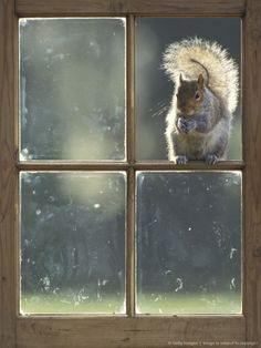 squirrel in window