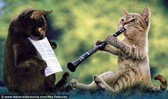 SeniorenNet - Grappig of Schattig - muzikale katten SeniorenNet - de startpagina voor senioren: de actieve 50-plussers