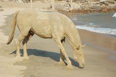 Muito lindo!!! Escultura de cavalo na areia.