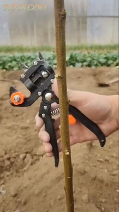Potager garden 101753272818685921 - Grafting Shears Pruning Shears Grafting Knife Specifications: Material: Super hard high carbon steel Color: Black Quantity: Packaged included: 1 × Grafting Shears Pruning Shears Grafting Knife Source by Wowelostore Pergola Patio, Backyard Landscaping, Small Pergola, Modern Pergola, Small Patio, Container Gardening, Gardening Tips, Kitchen Gardening, Balcony Gardening