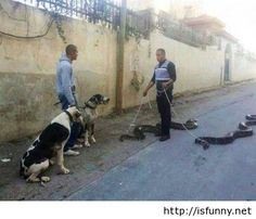 Funny pet and snake walking isfunny.net
