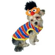 sesame street costumes for dog they had these @ petsmart today for small dogs.  sc 1 st  Pinterest & Sesame Street pet costumes (New York Dog) | Pinterest | Pet costumes ...