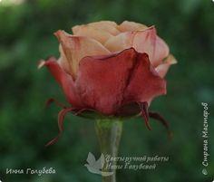 Девочки,сегодня лепила вот такую розу с живого образца и отсняла поностью сборку и тонировку лепестков,чашелистников и стебля.Хотела завтра выложить,но решила сегодня,а то решили малых повести в зоопарк) .И воскресенье буду занята. Так что выкладываю) фото 4