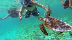 Snorkelling with Turtles at Klein Curacao Places To Travel, Places To See, Willemstad, Island Beach, Best Location, Viera, Vacation Destinations, Strand, Turtles