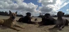 This Beach Party #Video Of #Dogs And a #Cat.