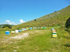 Το μελισσοκομείο ανάμεσα στους ποταμούς Λούρο και Άραχθο στις ανθισμένες πλαγιές του Ξηροβουνίου στη νότια Πίνδο.
