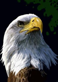 eagle by oya-yugi on DeviantArt Aigle Animal, Eagle Wallpaper, Eagle Drawing, Eagle Painting, Eagle Pictures, Eagle Art, Eagle Tattoos, Tier Fotos, Birds Of Prey