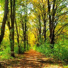 Running trail... Maple Lane