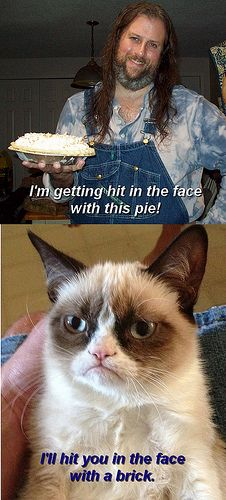 Grumpy Cat would prefer the brick for you.