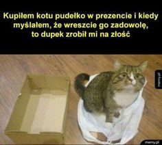 Informations About Ich habe meiner Katze einen Karton geschenkt un - Very Funny Memes, Wtf Funny, Funny Cats, Funny Animals, Cute Animals, Funny Animal Pictures, Funny Photos, Animal Pics, Polish Memes