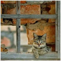 ❧ Cat in the window ❧ =^..^=