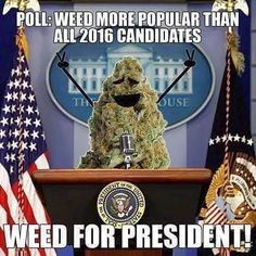 Cannabis has more use than any politician! If they were toilet paper I wouldn't even wipe my ass with them! Weed Memes, Weed Humor, Weed Quotes, Stoner Humor, Endocannabinoid System, Marijuana Plants, Buy Weed, Cool Countries, Smoking Weed