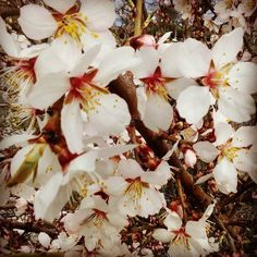 Me encanta la Primavera.  #castillayleon #cyl #salamanca #pic #picoftheday #picture #pictures #photography #photographer #photo #picoftheday #picturesque #españa #spring #primavera #flores #flowers #flor #nature #naturaleza #naturelovers #tree #arbol