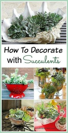 """One of the fun things about succulents is that they look terrific in all kinds of containers and they are easy to grow (even for those with """"black thumbs""""). There are so many different shapes, sizes and colors of succulents that it's easy to make a beautiful and unique succulent garden! Here are some pretty indoor succulent container ideas for your home to inspire you! by aileen"""