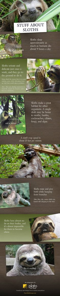 Some sloths for you - Imgur