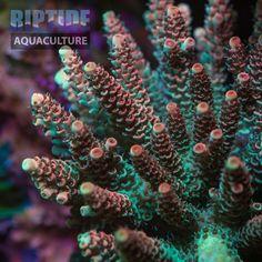 Hard Coral, Animals, Animales, Animaux, Animal, Animais