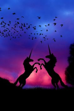 Aug 2016 - I want to be a Unicorn! See more ideas about Unicorn, Unicorns and mermaids and Real unicorn. Unicorn And Fairies, Real Unicorn, Unicorns And Mermaids, Unicorn Art, Magical Unicorn, Cute Unicorn, Rainbow Unicorn, Purple Unicorn, Magical Creatures