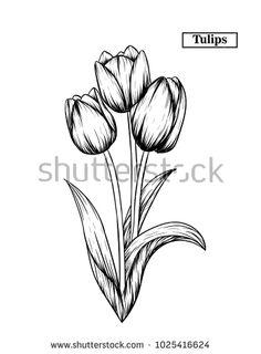 Tulip Sketch By ScarletRainxX On DeviantART   Tulip ...