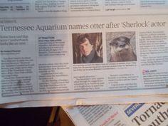 """""""Tennessee Aquarium names otter after Benedict Cumberbatch."""" We've done it! We've made it real! o_O"""