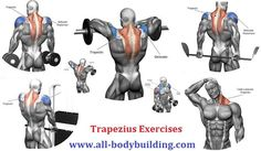 3 Best Trapezius Exercises to Build Your Traps Fitness Workouts, Fitness Motivation, Workout Tips, Muscle Fitness, Health Fitness, Shoulder Workout Routine, Traps Workout, Muscle Building Workouts, Chest Workouts
