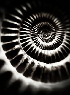 Fibonacci- golden mean  Something letting us know we aren't alone and there is a reason.... Right? ;)