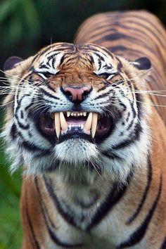 Que dentes afiados,me dá medo.