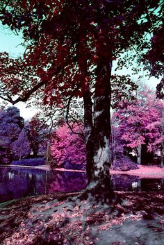 Introducing LomoChrome Purple - A Color Negative Film That Yields Infrared Results! - Lomography