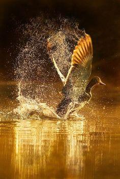 #Gold at flight