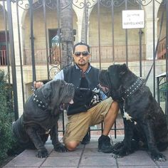 Neapolitan Mastiffs Old World Ren 2.5 years with Old World Don Vito at 11 months with me. See more at www.oldworldmastinos.com and follow us on instagram at oldworldmastinos