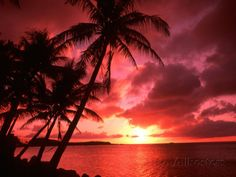 Palms And Sunset at Tumon Bay, Guam Photographic Print by Bill Bachmann at AllPosters.com