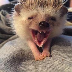 "wind-ranger: ""Big yawn! Good morning Elton! Elton is having his nails trimmed…"