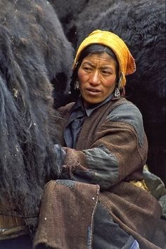 Himalayas -Visiting yak herders During milking © Volker Abel