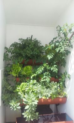 """A little different from most """"Hydroponic"""" setups isn't it?"""