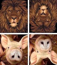 It's an owl, it's a pig? Animal optical illusion Pinned by www.myowlbarn.com