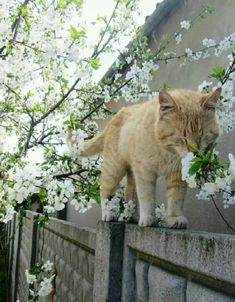 These cute cats will make you amazed. Cats are fascinating friends. Cute Kittens, Cats And Kittens, Kitty Cats, Animals And Pets, Baby Animals, Funny Animals, Cute Animals, I Love Cats, Crazy Cats