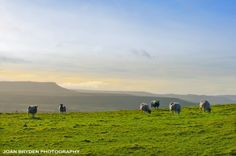 View od Addleborough from Lamb Hill, Askrigg, Wensleydale Yorkshire Dales, Lamb, Photo Galleries, Royalty Free Stock Photos, Wall Art, Places, Prints, Pictures, Travel