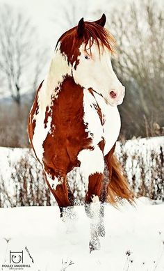 The horse's pose, the markings, the snow...ahhh