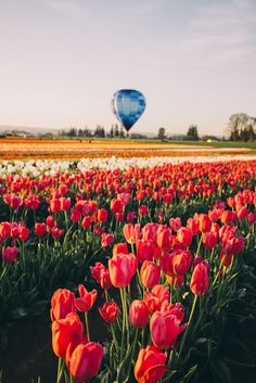 Wooden Shoe Tulip Festival, Oregon