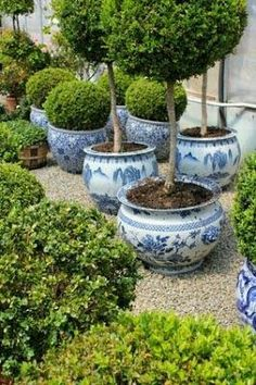 Never enough boxwoods or blue and white planters - particularly together. Never enough boxwoods or blue and white planters - particularly together. White Planters, Fall Planters, Blue And White China, Blue China, Chinoiserie Chic, White Gardens, White Decor, Dream Garden, Garden Pots