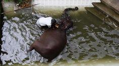 elephant bath!