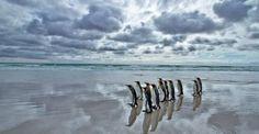 pinguinos-1[1]