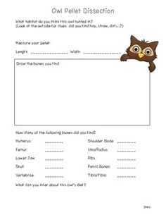 Worksheets Owl Pellet Dissection Worksheet owl pellet dissection notebooking pages from notebookingfairy com heres a simple page for use with younger students