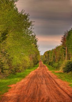 Forest Road, Madeline Island, Wisconsin