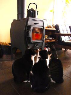 three cats [Mori Wajin's ie-neko cat]