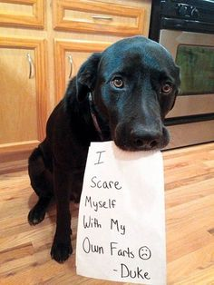 14 Hilarious and Cute Guilty Dogs (Dog Shaming Pics) #dogsfunnybaby