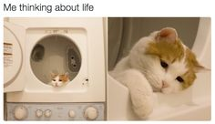 This existential crisis: | 18 Cat Memes Literally Everyone Will Relate To