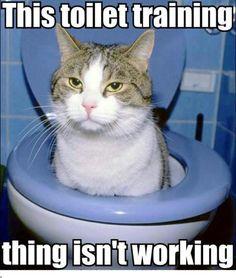 Toilet training for kittehs