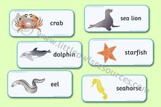 SEA ANIMAL WORD CARDS (REALISTIC STYLE)   Engaging Sea Animal (realistic style) word cards. Use as part of 'Under the Sea' themed role play areas and displays. Blank cards within the set to make your own or challenge the children to. Have fun for free! Eyfs Activities, Literacy Games, Learning Activities, Nursery Practitioner, Alphabet Display, Early Years Teacher, Role Play Areas, Display Banners, High Frequency Words