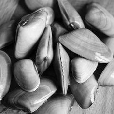 nochef nochefblog telline fruttidimare seafood instafood foodblogger foodphotography carlodisanto